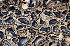 Beautiful texture of cracked earth with oil Royalty Free Stock Image