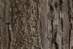 Beautiful texture of the old tree bark. Beautiful texture of the old tree trunk bark background Stock Photo