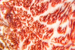 Beautiful texture of wagyu beef are close up Royalty Free Stock Photography