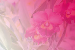 Beautiful Thai orchid flower backround Royalty Free Stock Photo