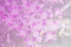 Beautiful Thai orchid flower backround Stock Photography