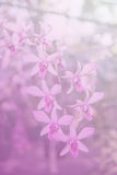 Beautiful Thai orchid flower backround Stock Image