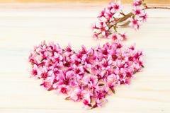 Beautiful Thai sakura cherry blossoms background Royalty Free Stock Image