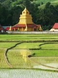 Beautiful thai temple and rice field. Beautiful thai temple and rice field in Thailand Stock Photography