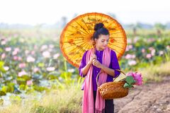Beautiful thai women farmer wearing thai traditional dress and walk on the lotus lake and looking lotus in basket with countryside royalty free stock photography