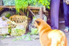 Beautiful Thaidog royalty free stock images