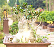 Bonsai trees Royalty Free Stock Photo
