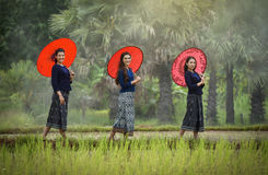 Beautiful Thailand Woman. Three beautiful Thailand Woman smile And brightly colored umbrella at farmland royalty free stock images