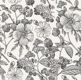 Seamless pattern. Realistic isolated flowers. Vintage background heliotrope hibiscus primavera hibisc Drawing engraving Vector. Beautiful thanks and white Royalty Free Stock Image