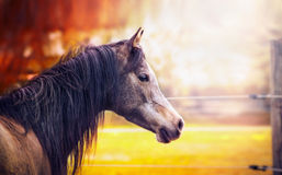 Beautiful  thoroughbred horse portrait on autumn nature background Royalty Free Stock Images