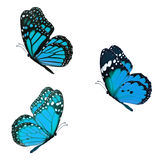 Beautiful three monarch Royalty Free Stock Photography