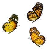Beautiful three monarch Royalty Free Stock Photos