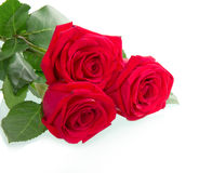 Beautiful three red rose Stock Image