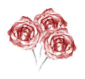 Beautiful three red roses bouquet charcoal artistic drawing. Pencil artistic drawing of three red roses bouquet royalty free illustration