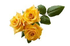 Beautiful three yellowish orange roses isolated on white background. Overhead view Stock Images