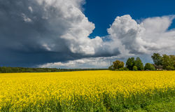 Beautiful thunderclouds above rapeseed field Royalty Free Stock Photography