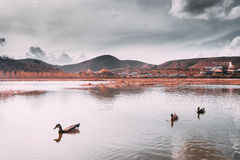 Beautiful Tibetan Buddhist monastery (Songzanlin temple. Or little potala) with ducks in lake in Shangri-la, Yunnan province, China. vintage pas tel tone Royalty Free Stock Images