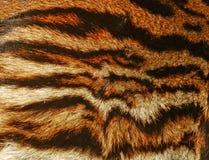 Beautiful Tiger fur background texture Stock Photos