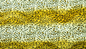 Beautiful tiger fur texture Stock Photography