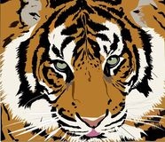 Beautiful tiger posing vector illustration