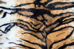 Beautiful tiger texture. Beautiful tiger stripes texture background stock images