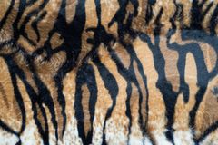 Beautiful tiger texture. Beautiful tiger stripes texture background stock image