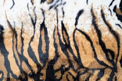 Beautiful tiger texture. A beautiful tiger texture background stock images