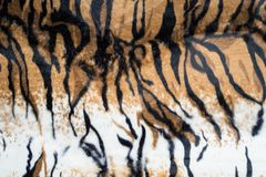 Beautiful tiger texture. Abstract beautiful tiger texture background stock image