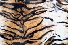 Beautiful tiger texture. Abstract beautiful tiger texture background royalty free stock images
