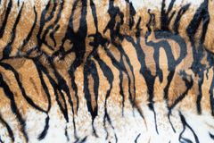 Beautiful tiger texture. Abstract beautiful tiger texture background royalty free stock photos