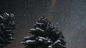 Beautiful timelapse animation of twinkling stars. Pine tree. Beautiful timelapse animation of twinkling stars moving across the sky at night. Pine tree. Moving stock footage