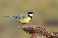 Beautiful tiny bird in the garden Stock Photo