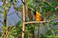 Beautiful tiny and colorful bird in the nature habitat Royalty Free Stock Photos