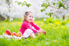 Beautiful toddler girl eating apple in a blooming garden Stock Photos