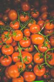 Beautiful Tomatoes Royalty Free Stock Photo