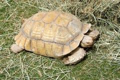 A beautiful Tortoise Stock Photography