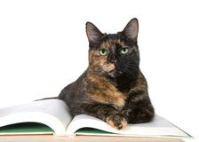 Beautiful Tortoiseshell cat with green eyes, laying on a story book. On wood table looking directly at viewer. Isolated on white. Story time, national royalty free stock photos