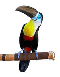 Beautiful toucan. Isolated on white Royalty Free Stock Photo