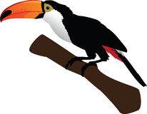 Beautiful toucan on branch Royalty Free Stock Photos