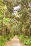 Beautiful trail Royalty Free Stock Photo