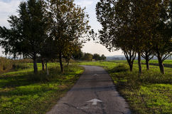 Beautiful trail during autumn Stock Photography