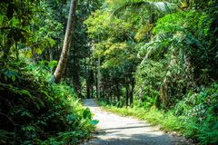 Beautiful trail in the jungle of Samui island Stock Photography