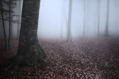 Beautiful trail in misty forest Stock Photos
