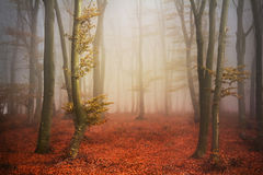 Beautiful trail in misty forest Stock Images