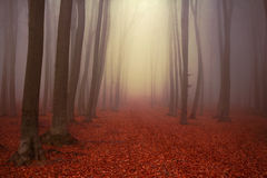 Beautiful trail in misty forest Stock Photo