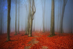 Beautiful trail in misty forest Stock Image
