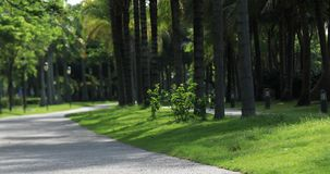 Beautiful trail in tropical park. Beautiful trail at tropical park in summer stock video footage