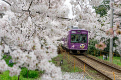 Beautiful train and sherry blossom. Royalty Free Stock Photos