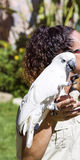 Beautiful trained cockatoo parrot on a woman's hand Stock Photo