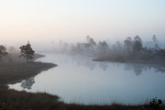 Beautiful tranquil landscape of misty swamp lake Stock Photography
